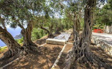 Hamac, transt et table de massage sous les oliviers centenaire en Grèce à deux pas de la piscine.