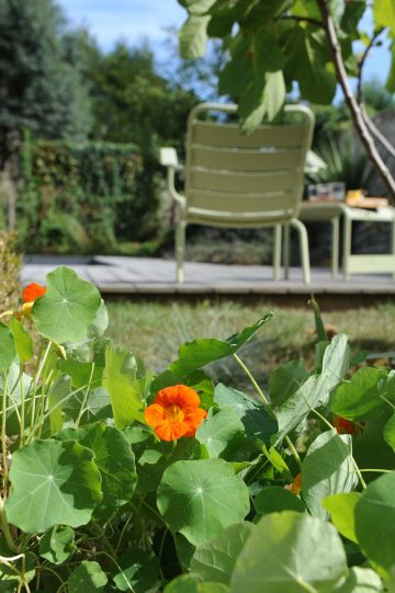 Et après l'ipé, toujours de la verdure reposante pour le regard et apaisante par sa douceur.