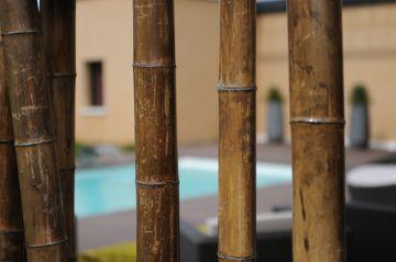 Focus sur les bambous au premier plan